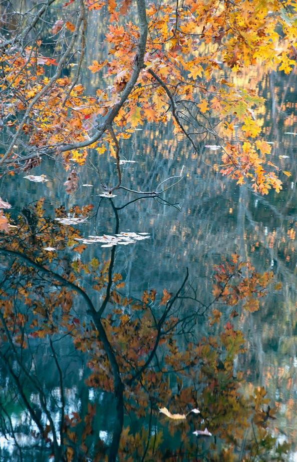 646B-Fall Branch Reflection